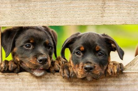 comer-carne-psicología-perro