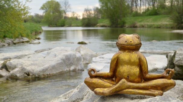 mindfulness-rana-conciencia