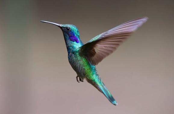 nido-vacio-hijo-colibri