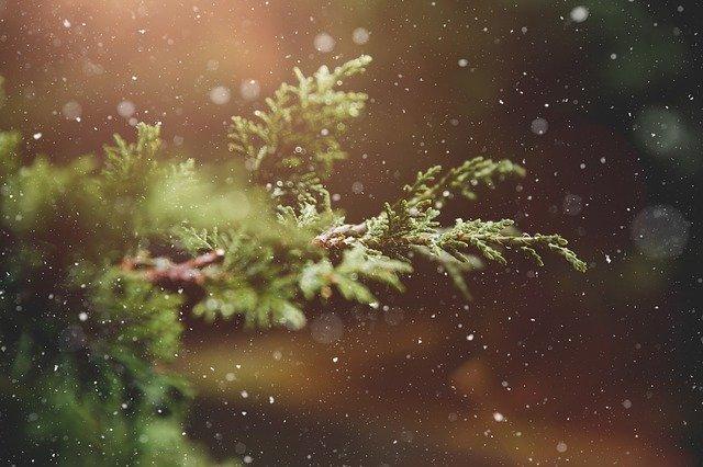 delirio-capgras-anuncio-navidad