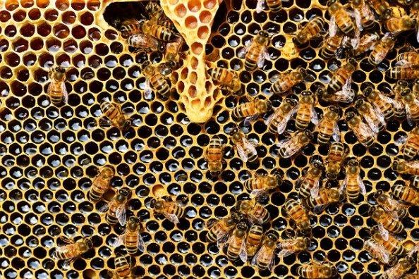 fobias-tripofobia-abejas-psicologia